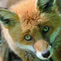 [Travail en cours] Création d'une quinzaine d'éléments de décors modulables pour table hiver - Page 2 Sad-fox